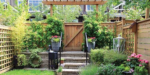 Backyard Garden with vibrant and luscious greenery.