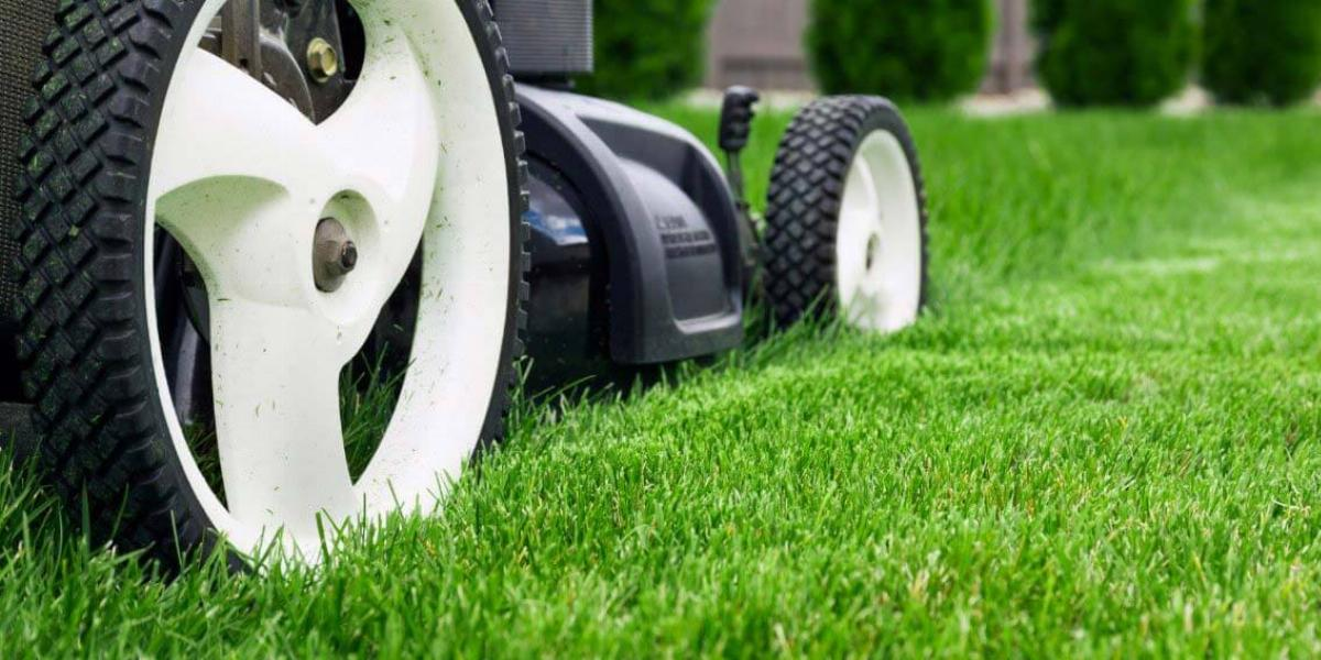 Mower Cutting Lawn