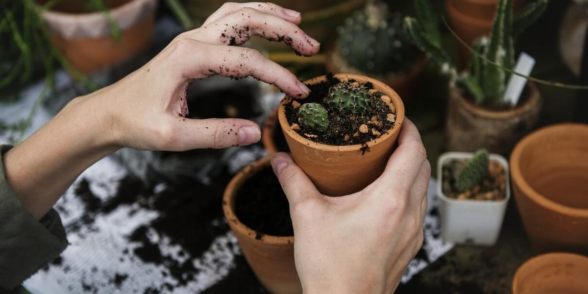 Hands Planting Seeds in a Pot
