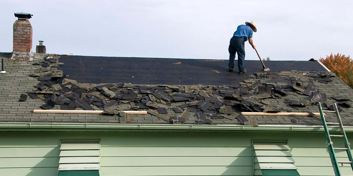 A man scrapes shingles off of the roof of a green house.