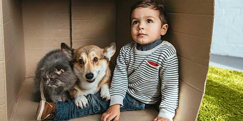 A Boy Sits in a Box on Green Carpet With a Welsh Corgi and Scottish Fold.