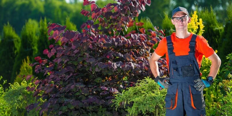 Running Lawn Care Business